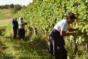 Rad u vinogradu.jpg